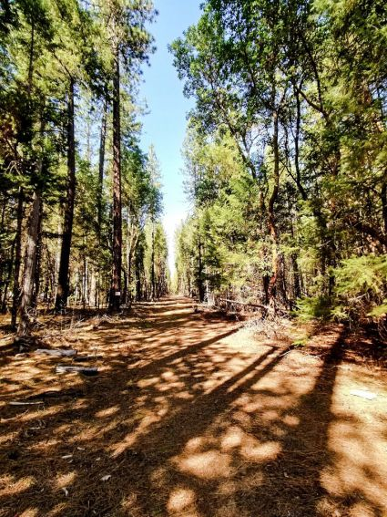 61 Acres Pleasant Creek Rd, Rogue River, OR 97537, #220119623